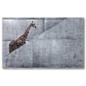 Αφίσα (αστείος, καμηλοπάρδαλη, σκάλες, μαύρο, λευκό, άσπρο)